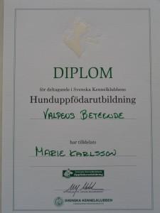 Diplom 2 004