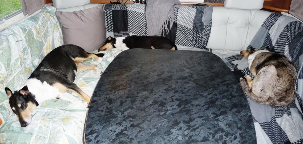 Så här kan man också ligga, matte och husse får sitta på golvet!