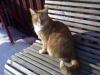 katten1